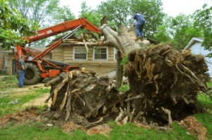 Stump removal specialist in adelaide why hire a stump removal expert the task of removing a tree stump on your property is one you consider as a do it yourself kind of project all you need is grab a chainsaw and start solutioingenieria Gallery